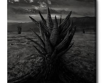"Giclee Canvas Wall Art ""Cactus"" by Dariusz Klimczak"