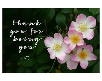 Notecards - Greeting Cards - Set of 4 - Floral - Fine Art - Blank Inside - Friendship - Nature Photo - Fine Art Photography - Note Card