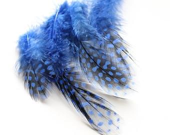 "Dyed Blue Guinea Hen Feathers 2-4.5"" | 25 pcs."