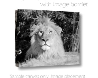 Lion Photography-Black & White Photography-Animal Photography-Fine Art Photography-Nature-16x20-Canvas-Childs Room Decor-Horizontal Canvas