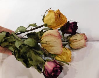 Dried Roses, Roses, Burgundy Pink and Yellow roses