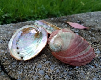 Natural Red Abalone Shell - Smudging - Cleansing