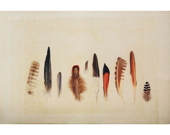 Nature Photography, Feather Collection, Still Life Photography, Still Life Nature Print, Feather, Rustic, 8x12 Print, Neutral Decor, Birds