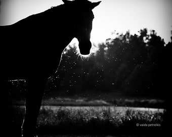 Horse photo - Original signed fine photography 8x8 inches print - Silhouette in black and white animal portrait Home decor