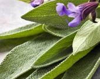 Anti Fungal Essential Oil Blend Tea Tree Sage and Myrrh