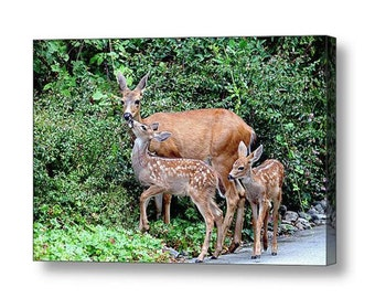 Wildlife Canvas, Nature Photography, Fawn, Baby Deer, Baby Animals, Deer Family Canvas, Twins, Love Art,Wildlife Photography,Gift for Mother