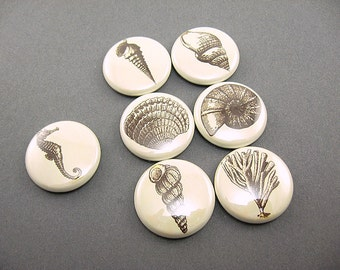 7 Sea Shells, Fridge Magnet Set, Cute Magnets, Wine Charms, Pins, Pin Back Buttons, nautical decor, ocean decor, neutral brown 1236