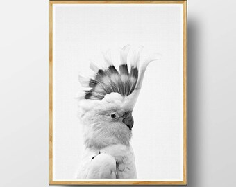 Galah  Print,  Australian Bird Print, Australian Bird Wall Art,  Australian Animal Print,  Cockatoo Print, Nursery Printable, Cockatoo