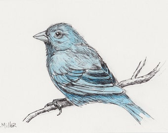 Indigo Bunting Original 5x7 Pen and Ink with Watercolor Art, Songbird Sketch, Bird Drawing