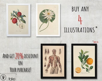 When You buy four illustrations, then this will be handy. Or 20% discount on Your purchase. - FREE SHIPPING WORLDWIDE