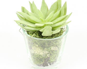 Small Artificial Plant Mix in Glass Vase, Succulent & Flowers for Office and Home #4