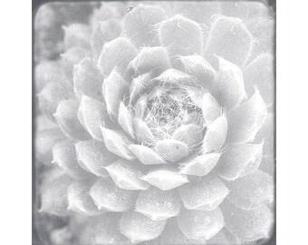 White Succulent Art Print, White Wall Art, Succulent Decor, Succulent Photograph