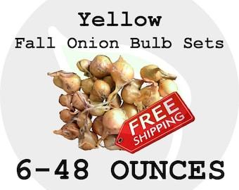 2017 Fall Winter Onion Bulb Sets (Yellow) - Organically Grown Seed Onions, Non-GMO - FREE SHIPPING!