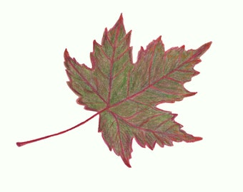 "Autumn Leaf Print Maple Leaf 5"" x7 "" - Red and Green"