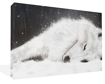 "White Wolf Lying In The Snow Canvas Print Ready To Hang 30"" x 20"""