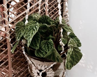 Shell planter | Suspended planter | Vintage planter