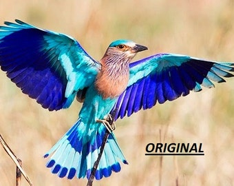 Lilac Breasted Roller 2... ~Counted~ Cross Stitch Pattern ~Computer Generated~... BBXS