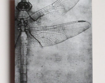 Metal photo Art of Silver Dragonfly Wings, Dragonfly metal wall art, Etched metal dragonfly photograph 5x7 inches