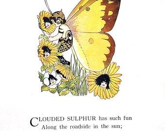 Clouded Sulphur Butterfly, Orange Sulphur Butterfly - Antique Book Page - Butterfly Babies, Butterfly Children - 9 x 6