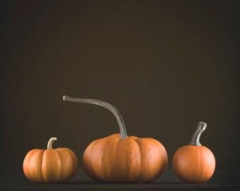 Pumpkin Photography, Thanksgiving Decor, Rustic Halloween Photo   Orange
