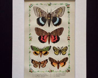 RARE 1881 French BUTTERFLY MOTH Collecting Chromolithograph Antique Print Lepidoptera Butterflies Papillons Home Decor Interior Design