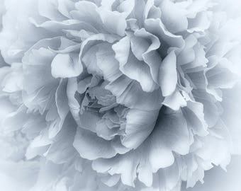 Black and White Peony by Sharon Younce