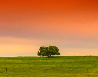 Three Trees at Sunset Along the Road, Digital Photography Download, Digital Sunset Photo, Landscape Photography, Sunset Stock Photo, Trees
