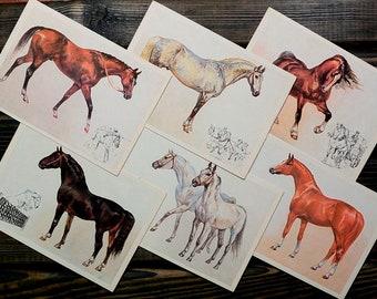 Horses - 6 Vintage Postcards, Ephemera, Prints