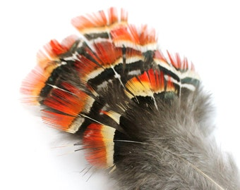 2-4 Inch Orange Pheasant Feathers. (10) Black Striped Feathers. Orange Bird Feathers for Masks. Orange Feathers for Costumes. White Striped.