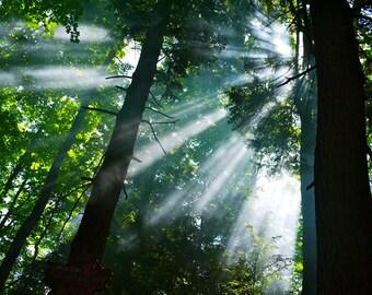Sun Rays Photography - Camping Print - Morning Sun Rays Through Trees - Nature