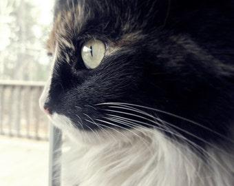 Cat Photo 5x5 Metallic Signed Print Waiting