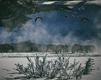 5x7 buffalo meadow photo print/post card