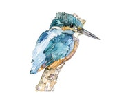 Kingfisher Painting - A P...