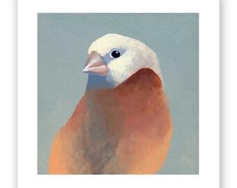 SALE! 5 X 5 Art Print - Finch Number 27