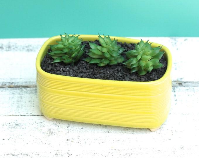 chartruese succulent container