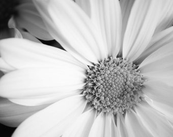 White Daisy Fine Art Flower Photography Print - Gallery Wall Decor - Home Decor - Black and White Photography - Flower Photography