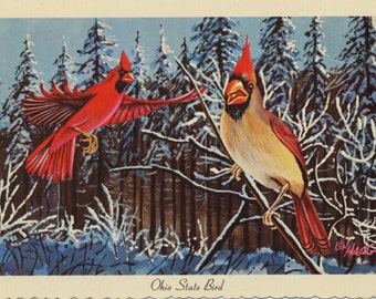 Ohio State Bird Cardinals in Snow Vintage Chrome Postcard (unused) Signed Ken Haag