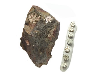 Cherry Blossom Stone Sakura Ishi Mica Pseudomorphing Cordierite Geological Oddity from Japan Thumbnail Mineral Specimen Tiny Earth Treasure