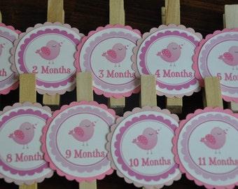 Pink Bird Photo Clips. Photo Clips. Bird Photo Clips. Month Clips. Pink. Set of 13. Newborn-12 Months. First Birthday.