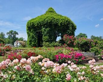 Elizabeth Park in Bloom, West Hartford, Connecticut, photo art, home decor, garden art, archival print, by Joe Parskey