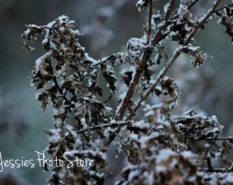 Sleeping Branches Canvas Photograph Size - A2, A3 + A4.