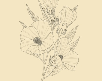 Mallow Plant | Botanical Illustration