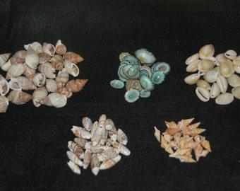 50 Seashell Crafting Mix (Limpet, Cowrie, Olive, Javana, Marginellas)