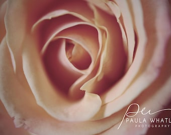 blush rose art, blush rose print, blush rose deco, blush Rose photo, rose print, rose wall art, rose photograph, soft rose photo, dreamy art