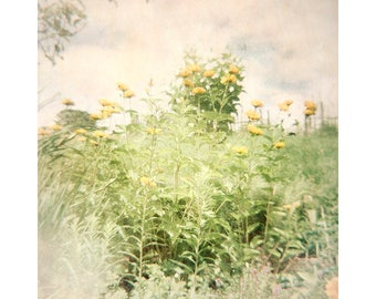 Garden Landscape Photography, Lomography, Holga Print, Farmhouse Decor, Rustic Decor