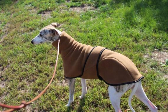 Australischer Windhund