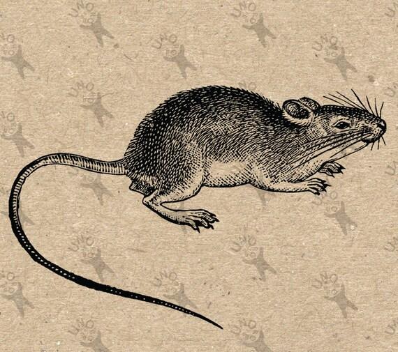 Vintage retro dibujo imagen rata ratón imagen instantánea
