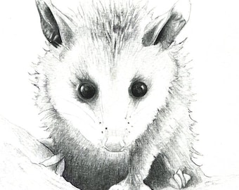 "Baby Opossum art print of a drawing available 5x7"" or 8x10"""
