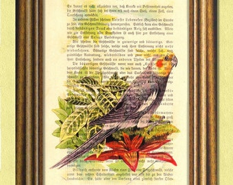 JON the COCKATIEL  - Parrot -  Parakeet - Dictionary art print -Vintage book page print recycled - Art Print Dictionary