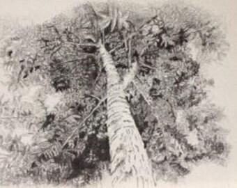 original pencil drawing of tree (1)
